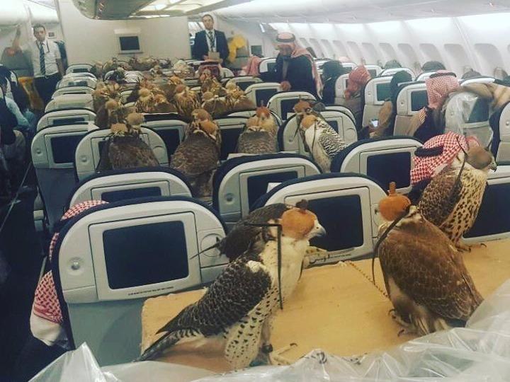 【フライトネタ】中東系エアラインでは鷹も立派なお客様⭐️そのVIPな取り扱い方法とSEP&SOPプロトコルについて