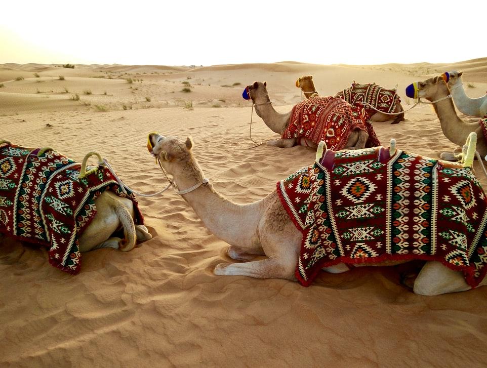 【中東生活】外国人クルーとの愛人契約?そんな金持ちアラブ人って実際にどんな性格&生活をしているの?